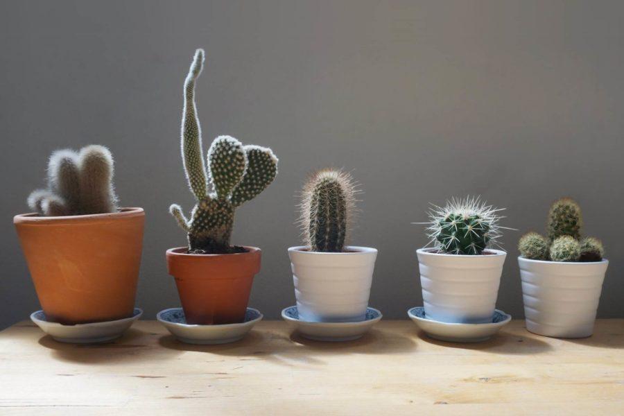 Hacken in soorten en maten (cactussen)